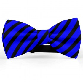 Papion barbati, albastru-primar, dungi negre late oblice