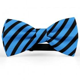 Papion barbati, albastru-regal, dungi negre late oblice