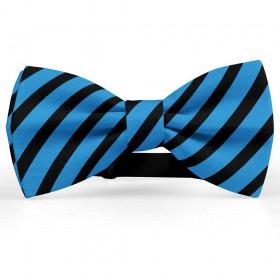 Papion barbati, albastru-azur, dungi negre late oblice