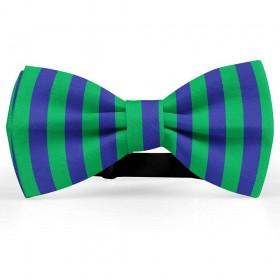 Papion bicolor, albastru safir-verde menta, dungi late verticale