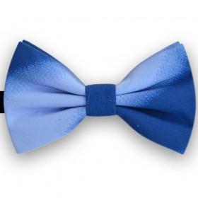 Papion barbati, albastru degrade, joc de culoare