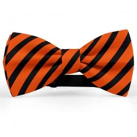 Papion barbati, portocaliu-coral, dungi negre late oblice